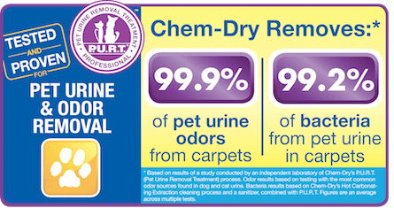 Chem-Dry of Lodi removes 99.9% of pet urine odors from carpets